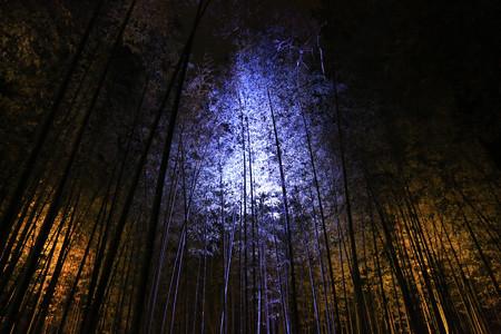 花灯路・竹林の小径 (4)