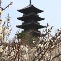 Photos: タワー