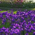 後楽園の春