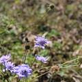 写真: 高山植物