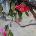 写真: アートな花