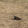 写真: 鳥