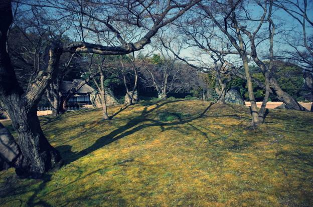 春の後楽園