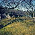 写真: 春の後楽園