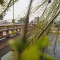 写真: 後楽園新緑輝き