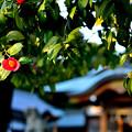 Photos: 成海神社