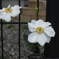 Photos: 素敵な庭