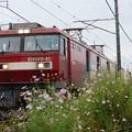 金太郎41号機牽引高速貨物3055レ