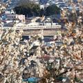写真: 満開の梅と臨時特急きりふり294号