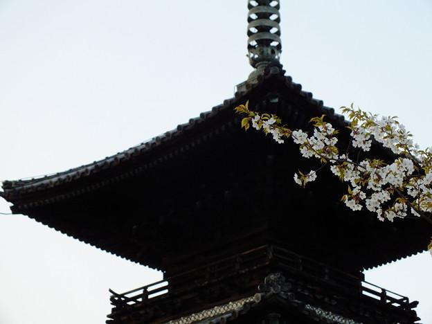 かんざし桜