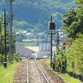 写真: 線路とひまわりおじさん