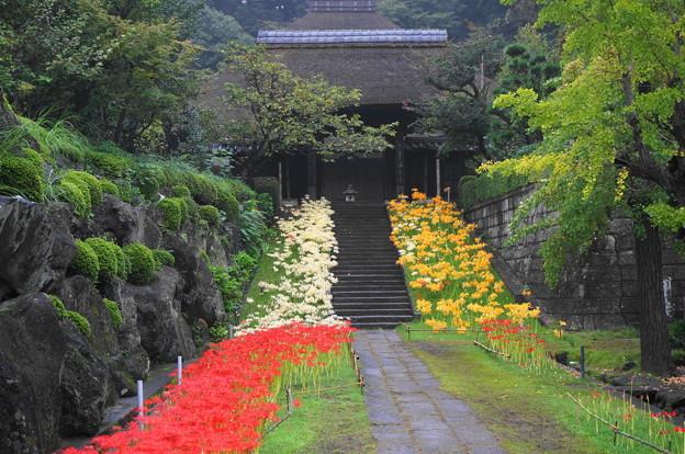 rs-160924_10_参道から山門を・SH(西方寺) (34)
