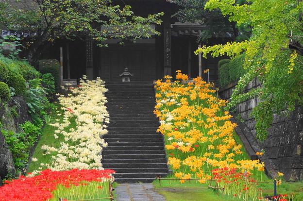 rs-160924_10_参道から山門を・SH(西方寺) (38)