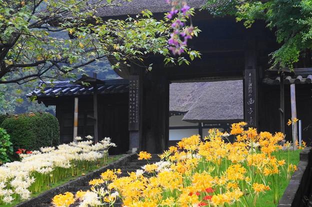 rs-160924_44_曼珠沙華から山門を・SL(西方寺) (4)