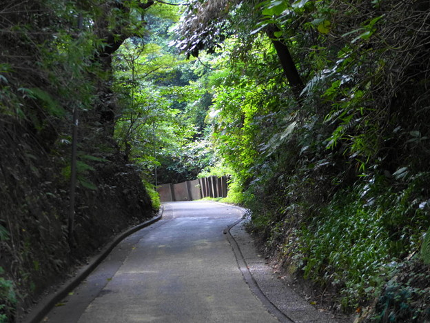 rs-160926_44_切通しの様子(亀ヶ谷坂) (2)