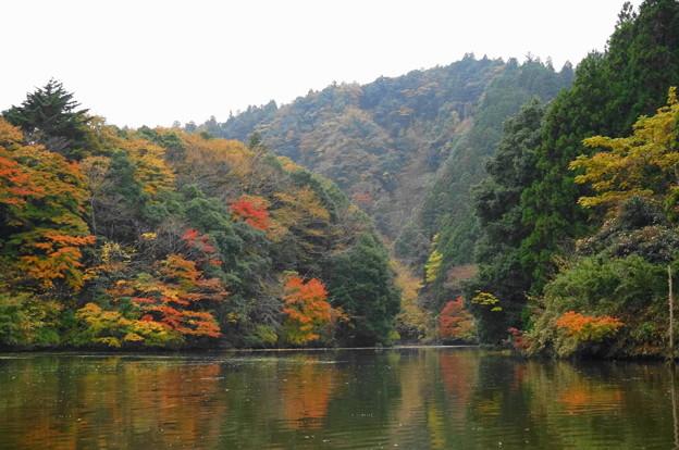 rs-161127_21_亀山湖の紅葉・SH(亀山湖クルーズ) (32)