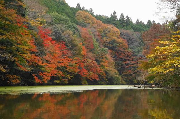 rs-161127_21_亀山湖の紅葉・SH(亀山湖クルーズ) (56)