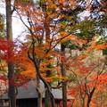 rs-161129_11_放生池付近の紅葉・SH(平林寺) (63)