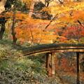 rs-161205_49_山陰橋付近の紅葉・SH(六義園) (14)