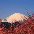 rs-170213_53_河津桜と富士山・SL(松田山) (2)