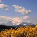 rs-170213_82_富士山と菜の花・SL(吾妻山) (9)