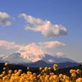 rs-170213_82_富士山と菜の花・SL(吾妻山) (10)