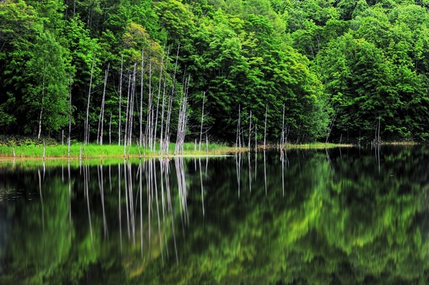 Calm of forest and pond