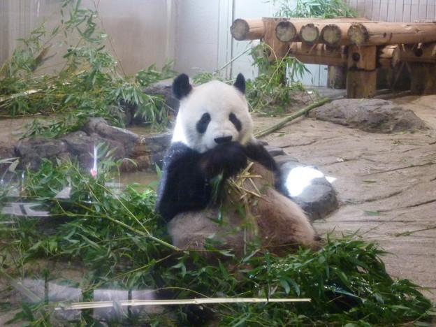 リーリー@パンダ 上野動物園