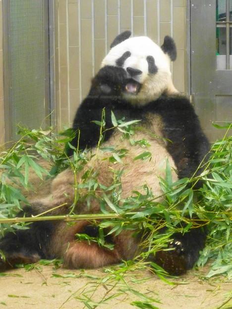 シンシン@パンダ 上野動物園