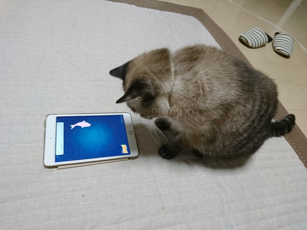 cat fishingに挑戦