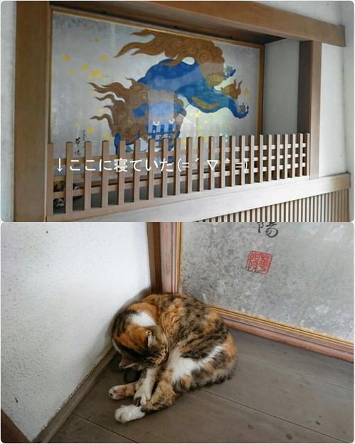江の島神社でもつけたニャン