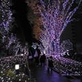 Photos: 新宿テラスシティ イルミネーション
