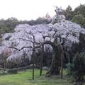 静かな名木