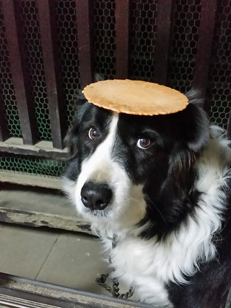 フリスビー犬ですから