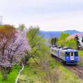 Photos: 桜と宗谷本線