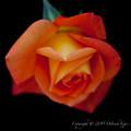 flowers-6573