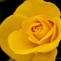 flowers-6611