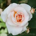 flowers-6761