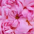 flowers-6854