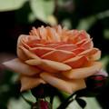 Photos: flowers-6884