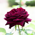 Photos: flowers-6891