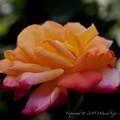 Photos: flowers-6918