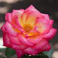 Photos: flowers-6925