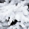 写真: 京都御所-0194