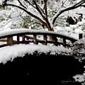 写真: 京都御所-0217