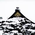 写真: 京都御所-0220