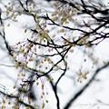 京都御所-0224