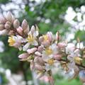 Photos: 【梅雨】木に咲くお花 季節のお花[2016]