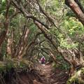 迷いの森への入口