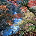 101119-105多摩川と紅葉